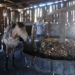 Traditional mill for making maguey mash