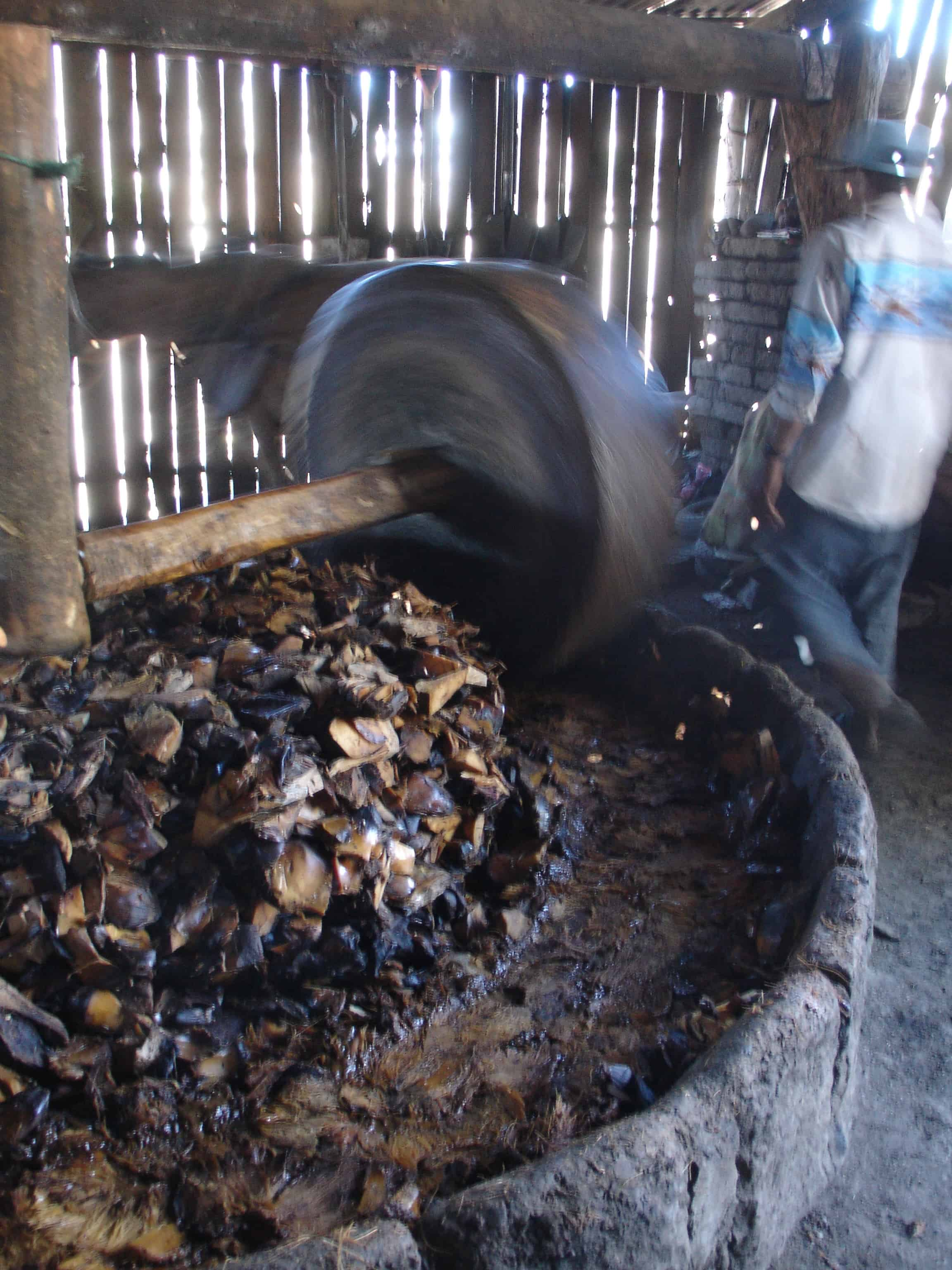 Making mash the traditional way in San Dionisio