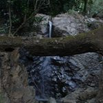 The water source, Mezcal Tosba