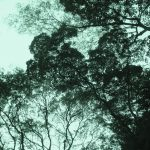 Tree canopy, Mezcal Tosba