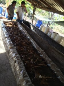 Wooden canoas for fermenting in Yutanduchi