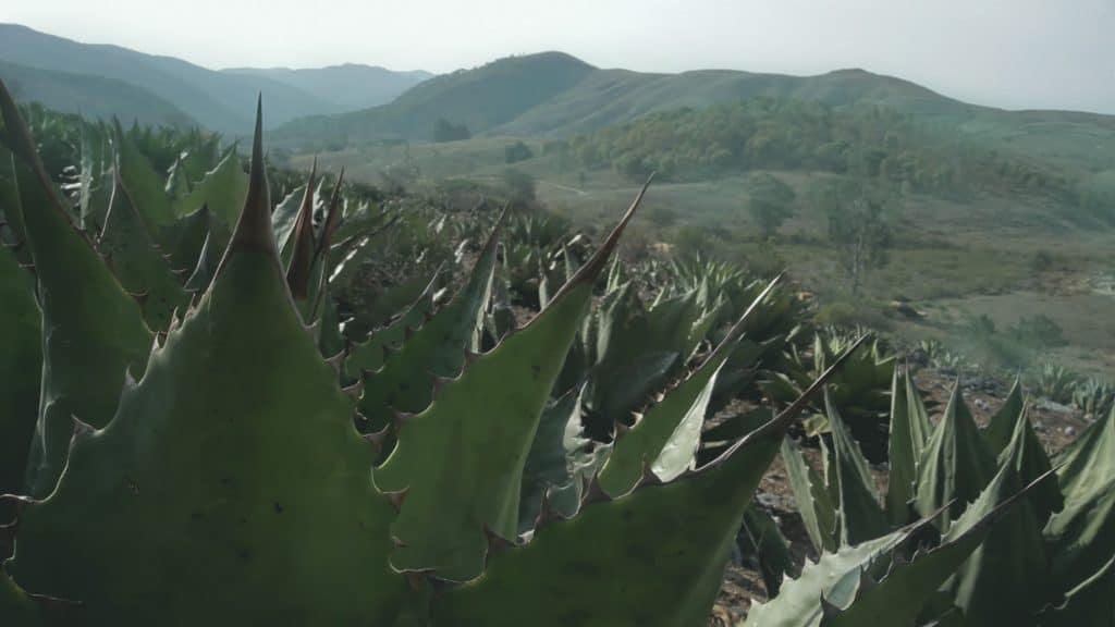 Guerrero Sierra Madre del Sur