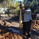 Hand crushing the agave.