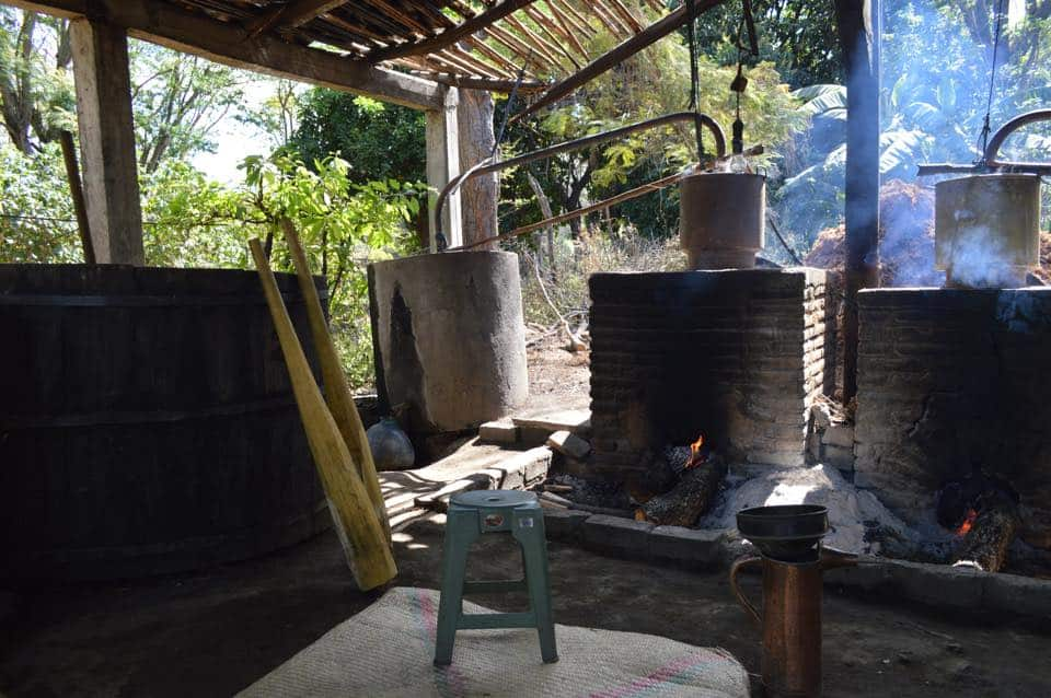 Where your mezcal comes from and why it matters