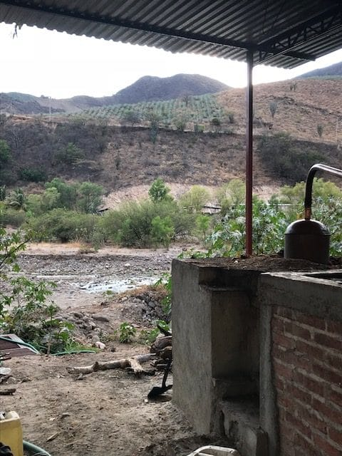 Ley de Desarollo Sustentable de Maguey-Mezcal – a new proposal to protect traditional mezcal production