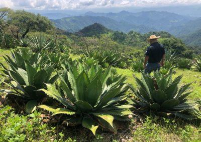 Mezcal Tour Michoacan - 1