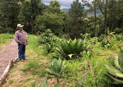 Mezcal Tour Michoacan - 14